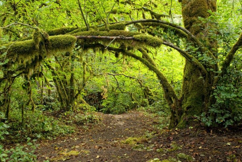 skogoregon trail royaltyfri fotografi