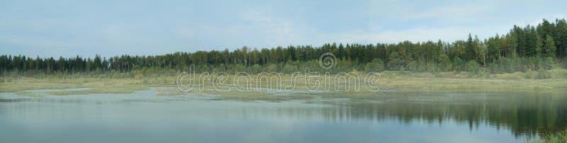 skogpanorama royaltyfri bild