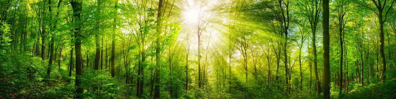 Skogpanorama med varma solstrålar arkivbild