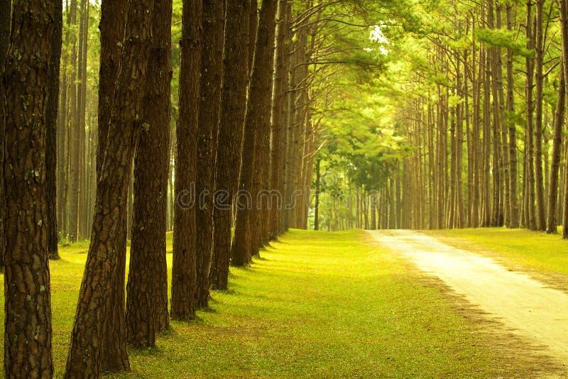 skogparken sörjer arkivfoto