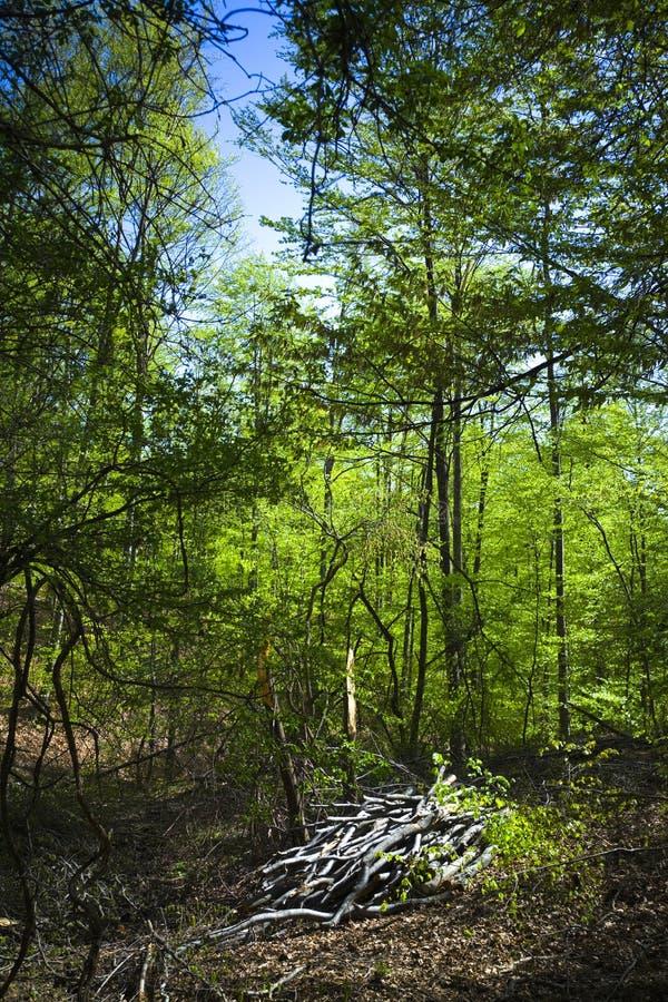 skogplats arkivfoto