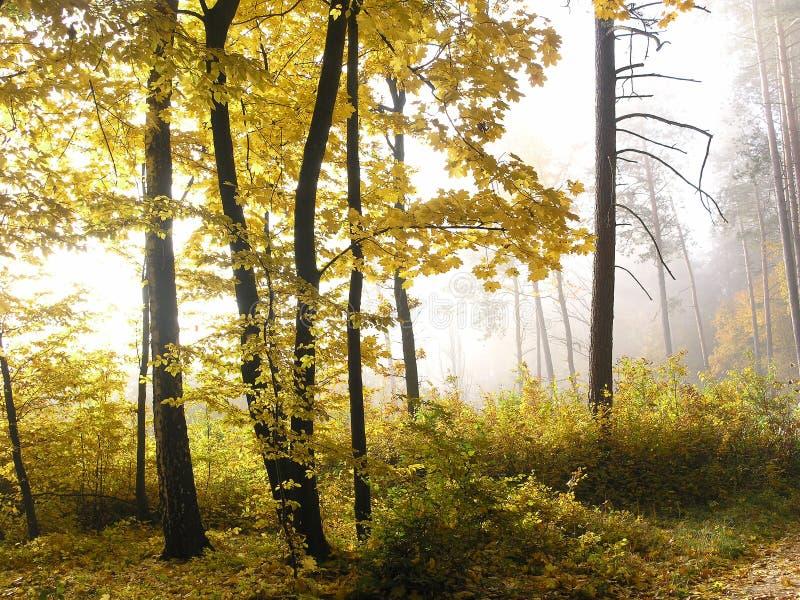 skogpoland roztocze arkivbild