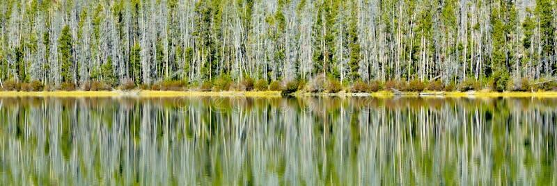 Skogreflexion i en bergsjö arkivfoton
