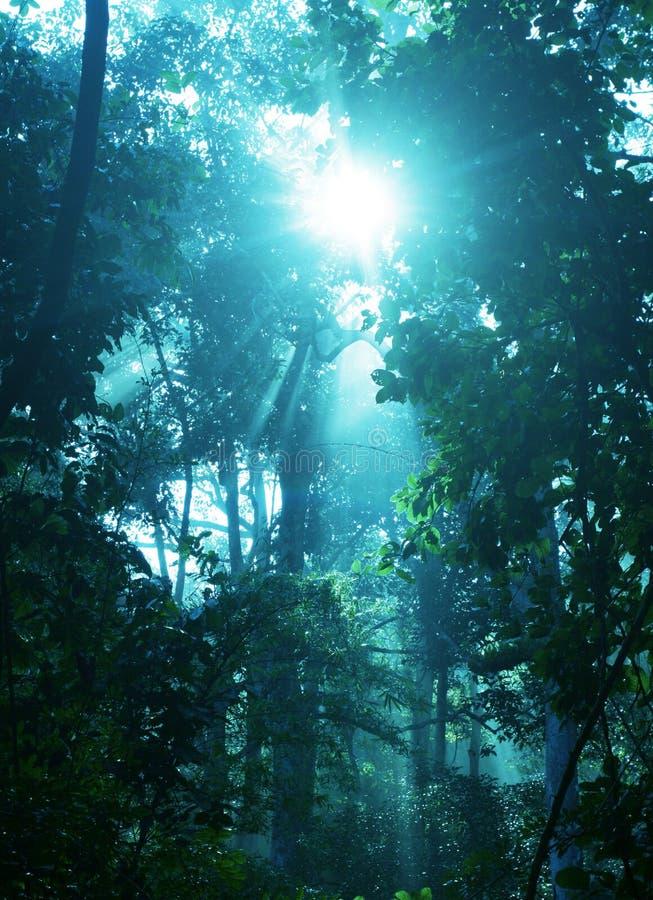 skogregn royaltyfri bild