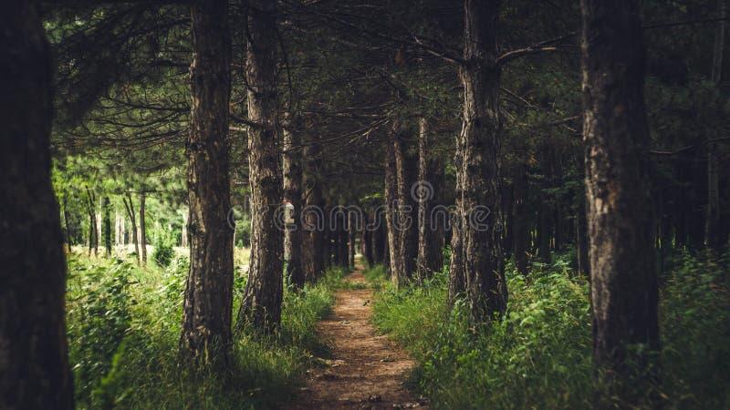 skogrussia för höst tidig trail royaltyfria bilder