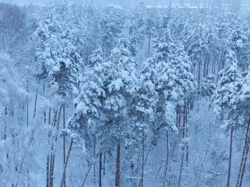 skogrussia vinter arkivbild