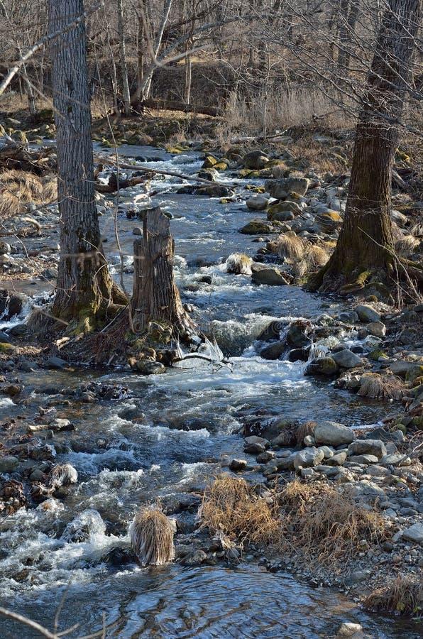 Skogs- bergflod 1 fotografering för bildbyråer