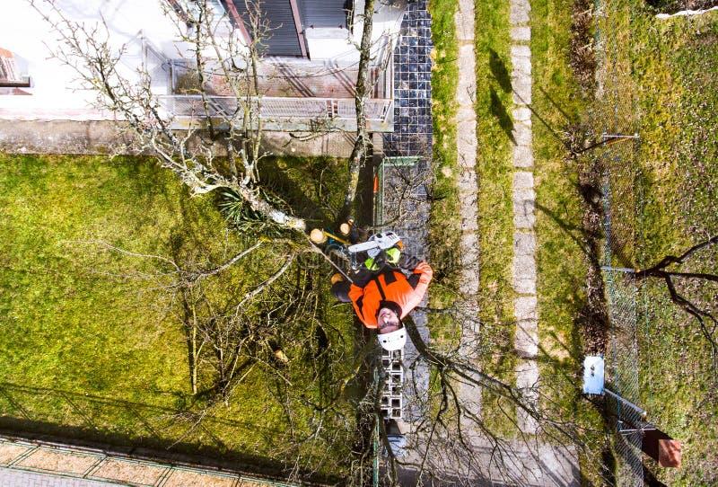 Skogsarbetare med chainsawen och selet som beskär ett träd royaltyfri foto