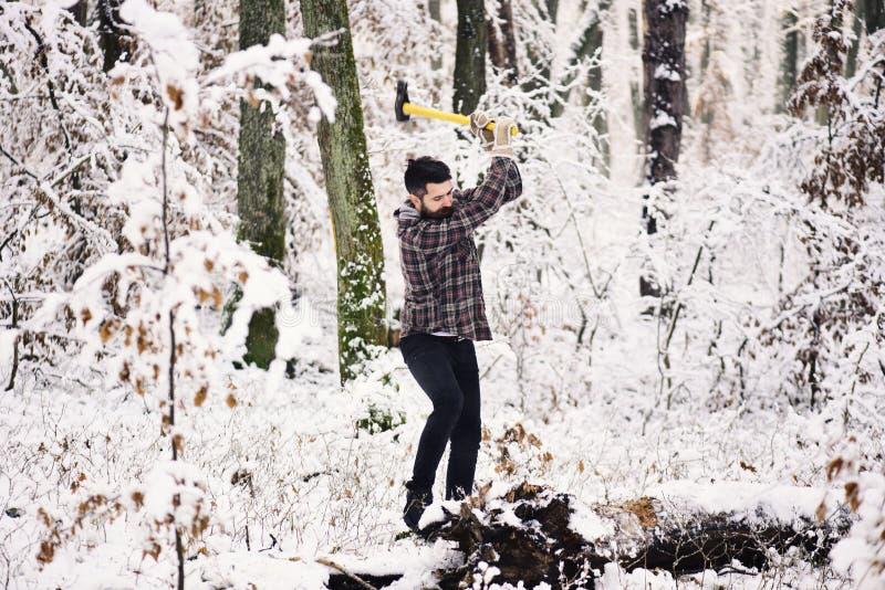 Skogsarbetare med träd som täckas av snö på bakgrund fotografering för bildbyråer