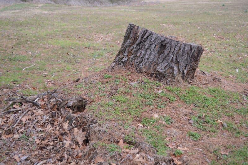 Skogsarbetare Service för borttagning för trädstubbe arkivbilder