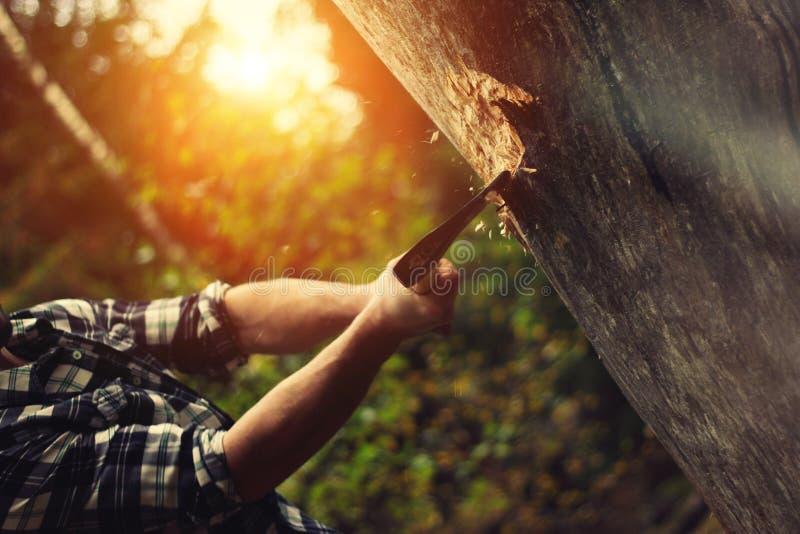 Skogsarbetare som hugger av en trädstam i skogen royaltyfria foton
