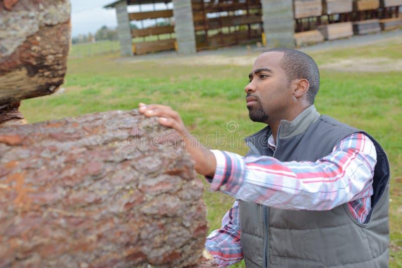 Skogsarbetare som kontrollerar om wood stam som är klar för lumbermill arkivbild