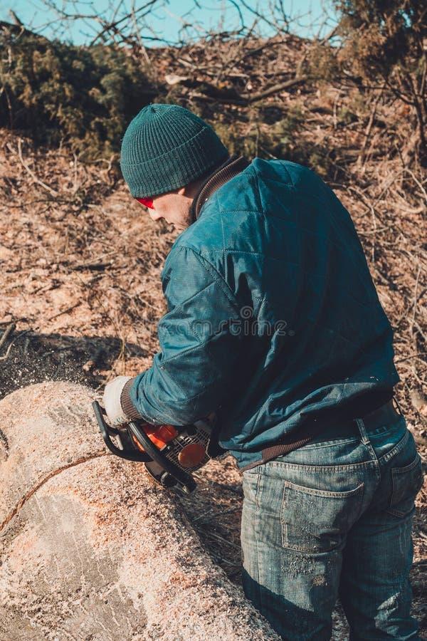 Skogsarbetaren klippte trädet av askaen från chainsawen till trät och förbereder sig för vinterperioden arkivfoto