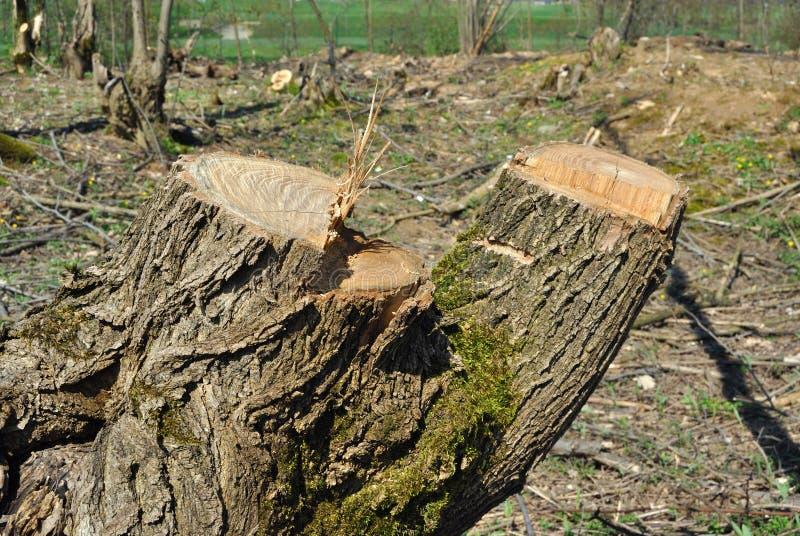 Skogsavverkning royaltyfria bilder