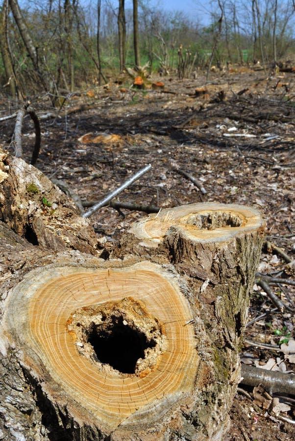 Skogsavverkning royaltyfri fotografi