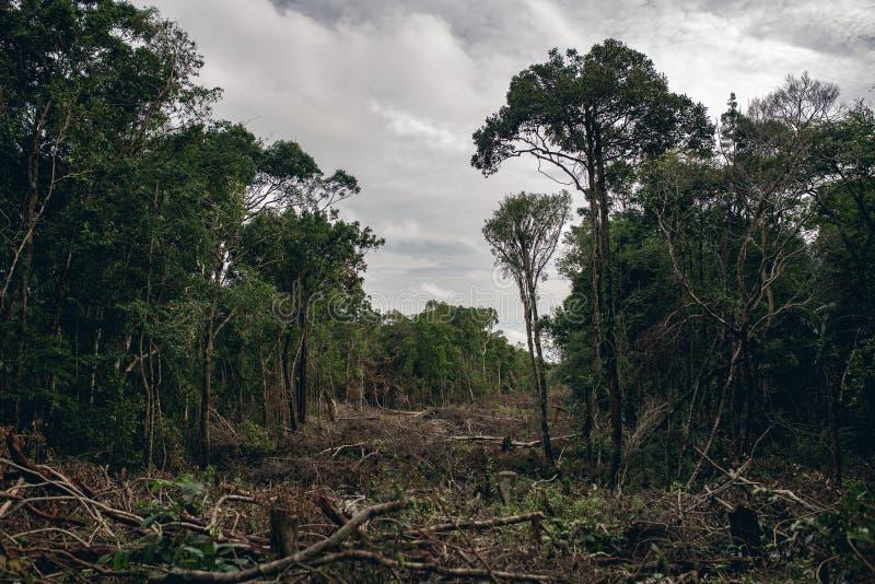 Skogsavverkning av en tropisk regnskog arkivfoton