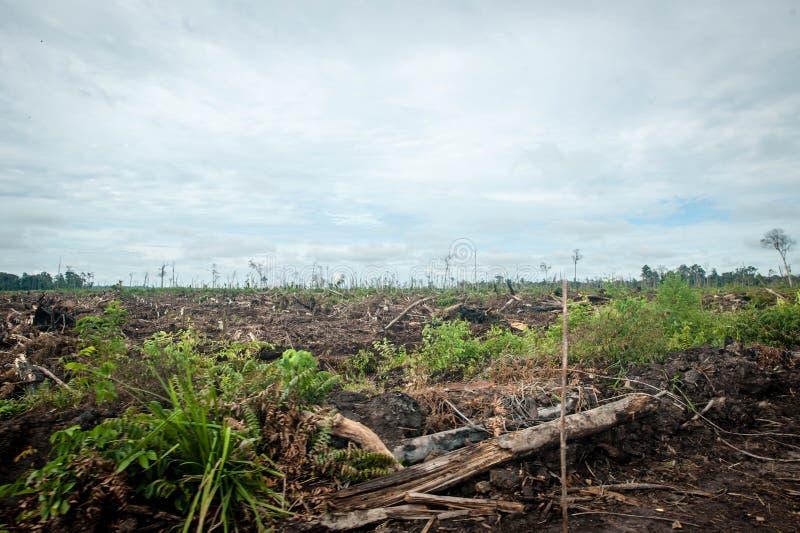 Skogsavverkning i Borneo fotografering för bildbyråer