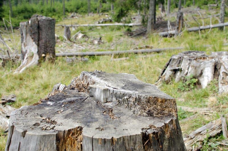 Skogsavverkning i Rumänien royaltyfria bilder