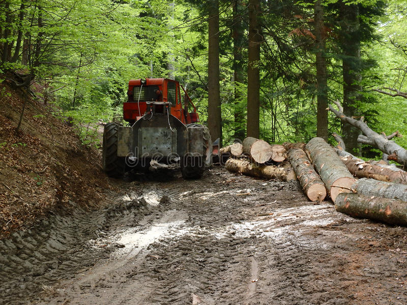 Skogsavverkning i Rumänien 2015 arkivfoto