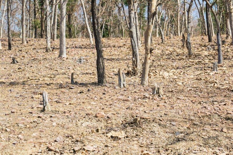 Skogsavverkning och avverka för träd royaltyfri fotografi