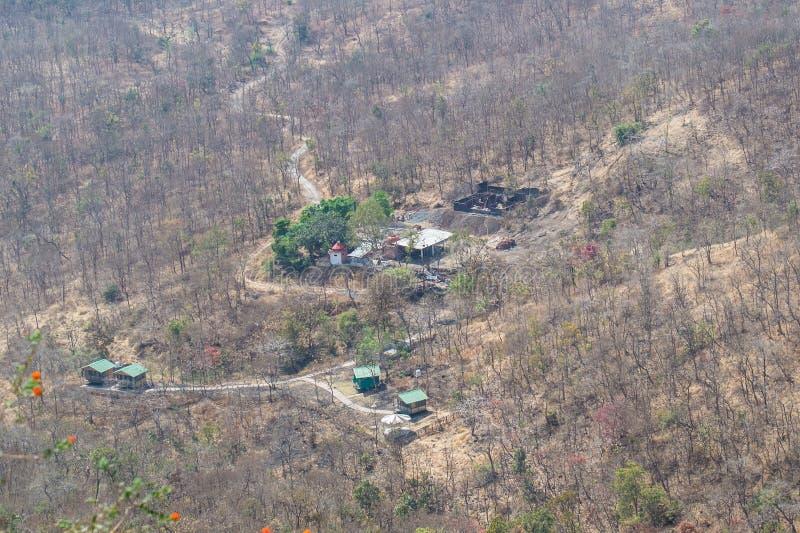 Skogsavverkning- och miljöförlust arkivbilder