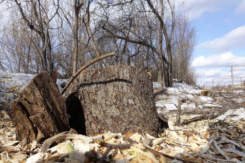 Skogsavverkningplats, vad lämnas, efter träden har klippts ner stubbar och trächiper Begreppet av förstörelsen av fotografering för bildbyråer