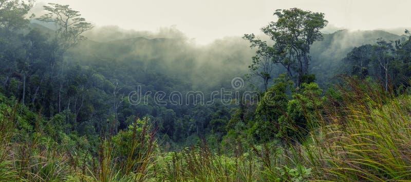 Skogsbevuxen bergssida i ett lågt liggande moln royaltyfri foto
