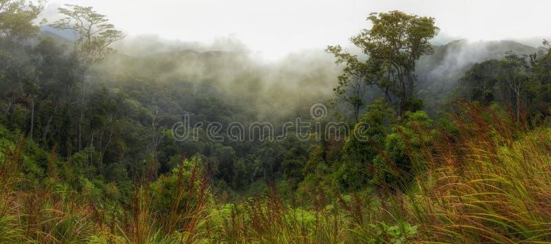Skogsbevuxen bergssida i ett l?gt liggande moln arkivfoton