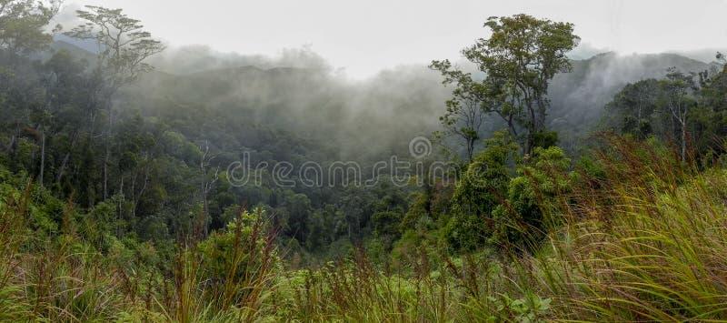 Skogsbevuxen bergssida i ett l?gt liggande moln royaltyfri fotografi