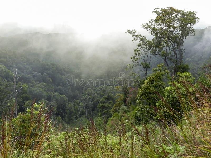 Skogsbevuxen bergssida i ett l?gt liggande moln royaltyfri bild
