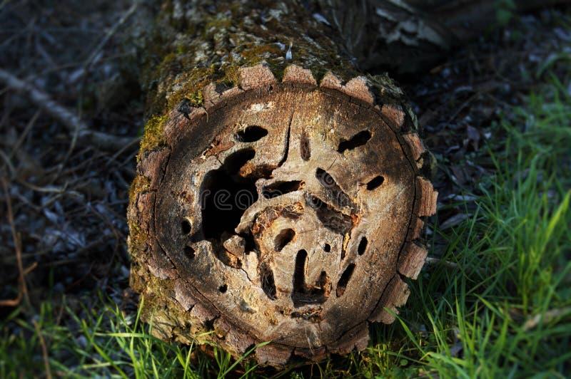 Skogsbevuxen loge arkivbild