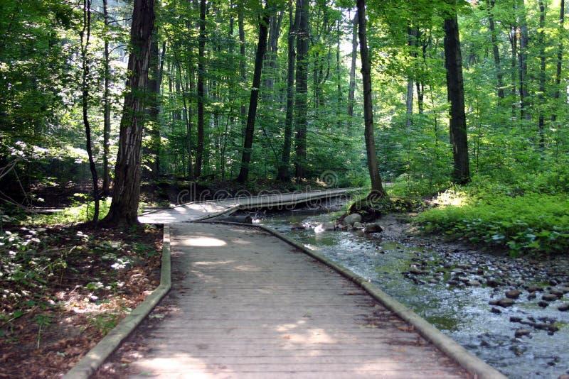 Download Skogsbevuxen skogbana fotografering för bildbyråer. Bild av skog - 40755
