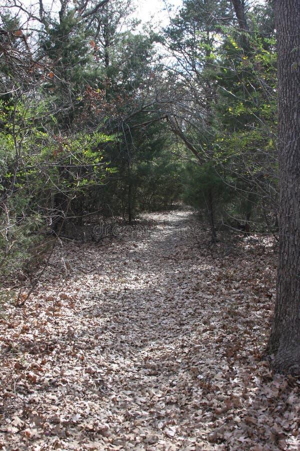 Skogsbevuxen slinga i Texas royaltyfria bilder