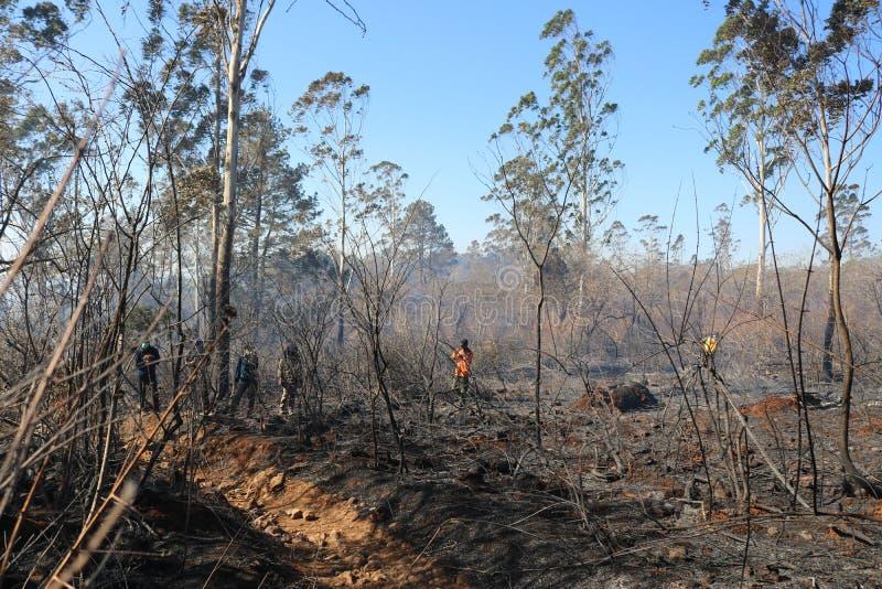 Skogsbränder på berget Bawakaraeng, South Sulawesi, Indonesien royaltyfri foto