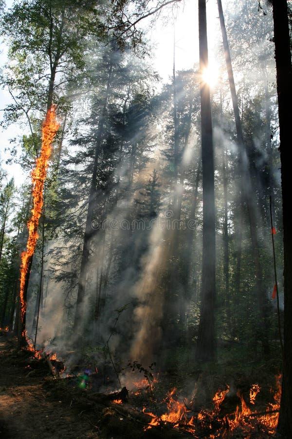 Skogsbrand royaltyfri bild