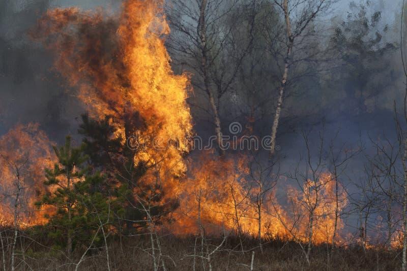 Skogsbrand royaltyfri foto