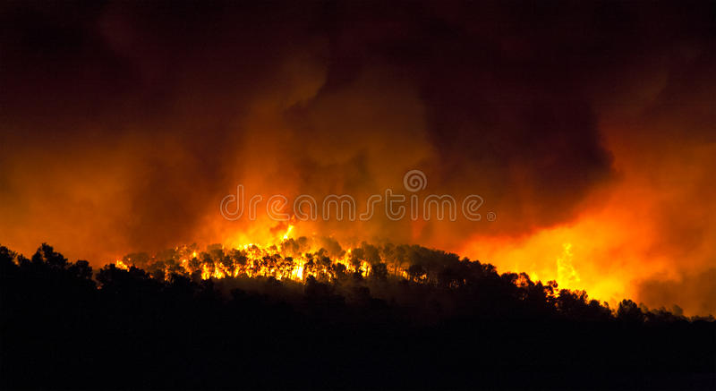 Skogsbrand på natten arkivbilder