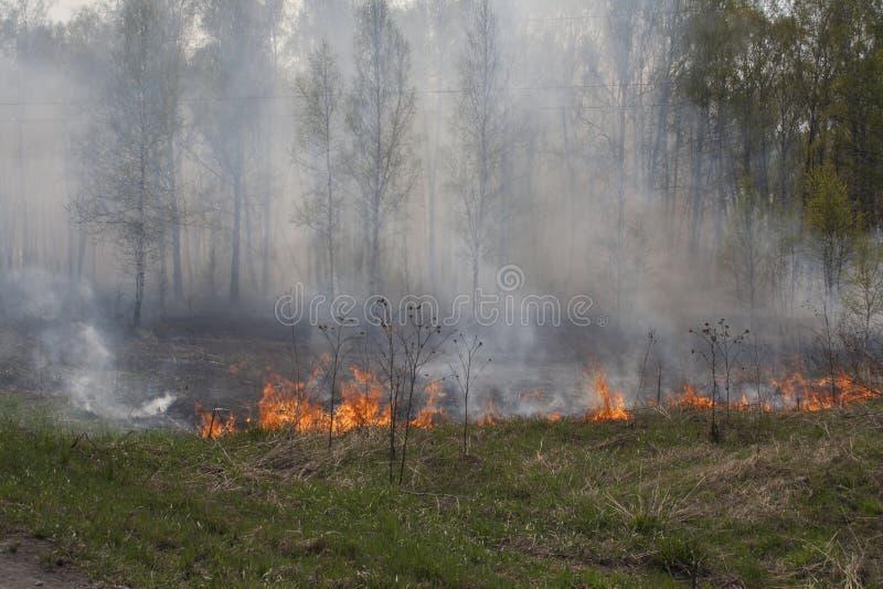 Skogsbrandrök, brand, torrt gräs, gröna träd royaltyfri foto