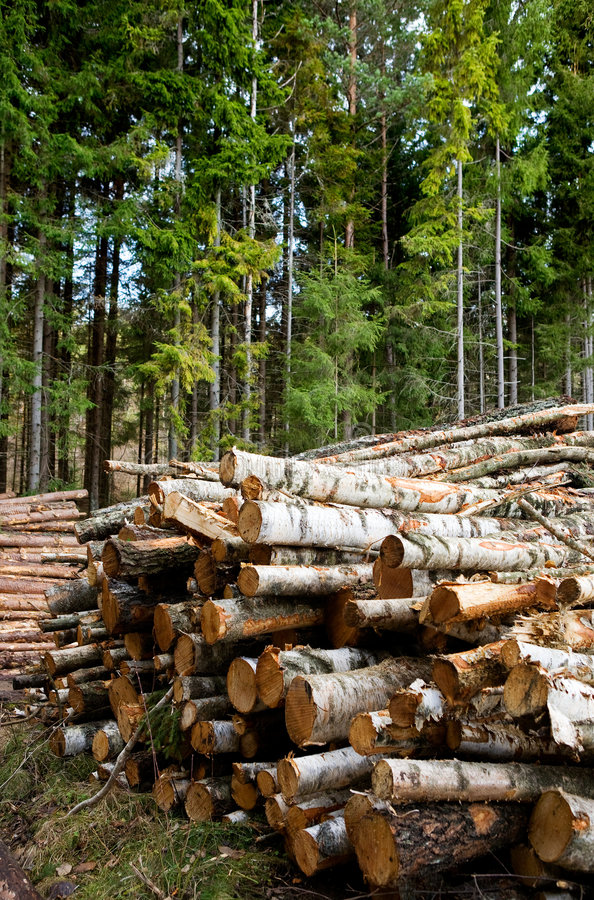 skogsbruk royaltyfri foto