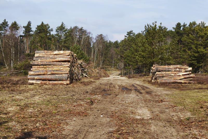 Skogsbruk - hög av trädstammar arkivbilder