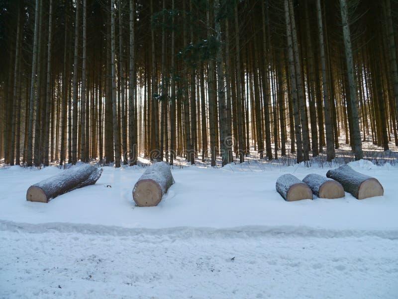 Skogsbruk i vinter med snöig trä royaltyfri bild
