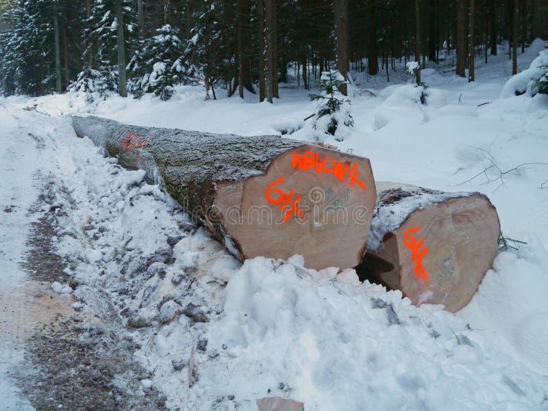 Skogsbruk i vinter med snöig trä royaltyfri foto