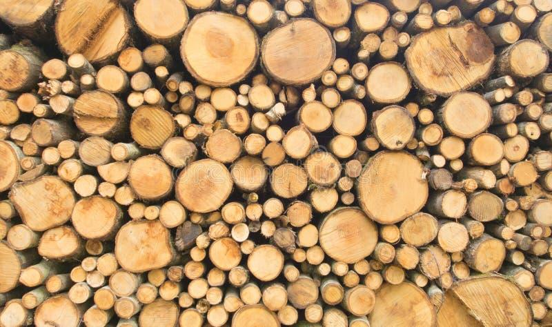 Skogsbrukbranschjournaler klipper och timrar att logga fotografering för bildbyråer