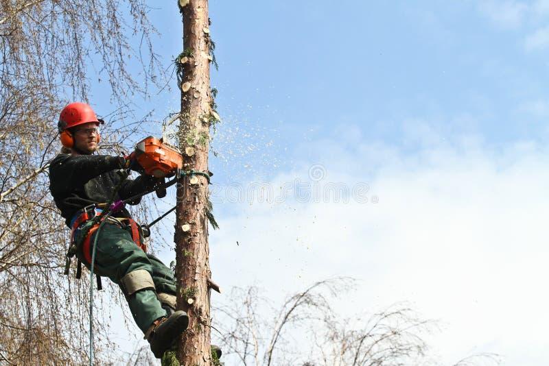 skogshuggare arkivfoton