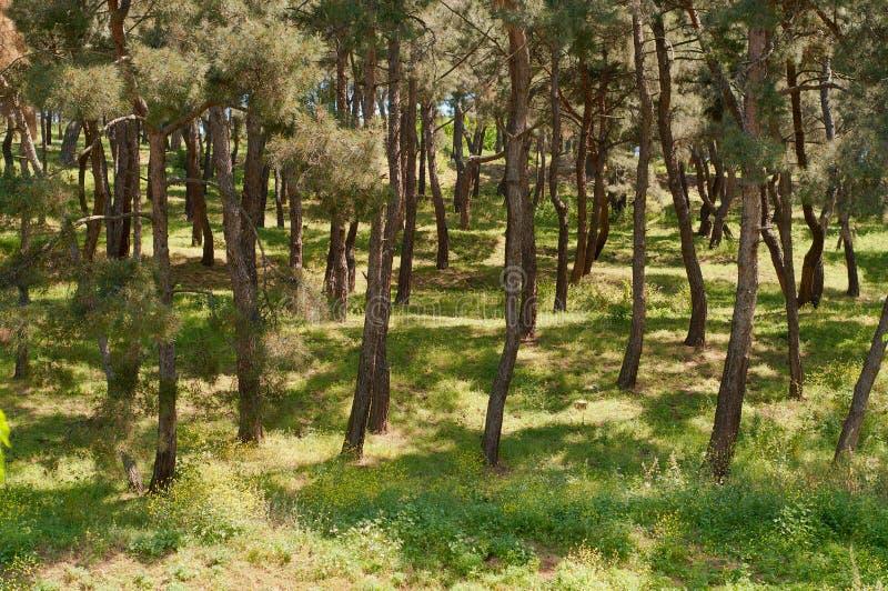 Download Skogsikt fotografering för bildbyråer. Bild av green - 19793481