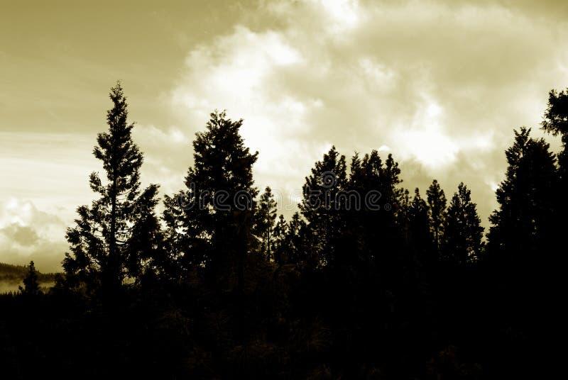 skogsilhouette royaltyfri bild