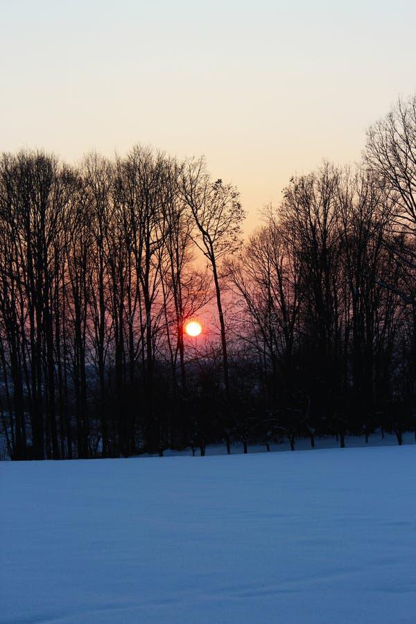 Skogsiluet i röd solnedgång under vinter arkivbild