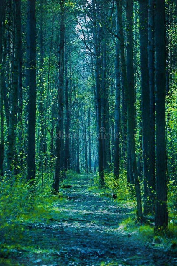 skogskymning fotografering för bildbyråer