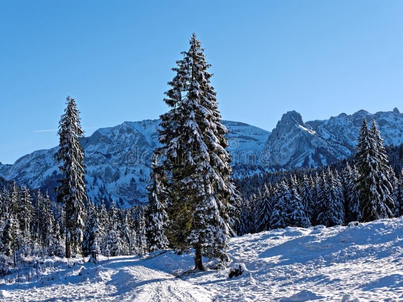Skogslandskap med blå himmel vid solig dag royaltyfria bilder