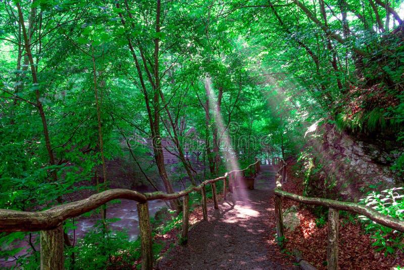 Skogslinga med träräcket i den gröna skogen nära den bigar vattenfallet Caras Severin romania royaltyfri foto